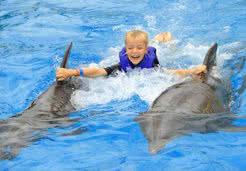 Dolphin Signature Swim