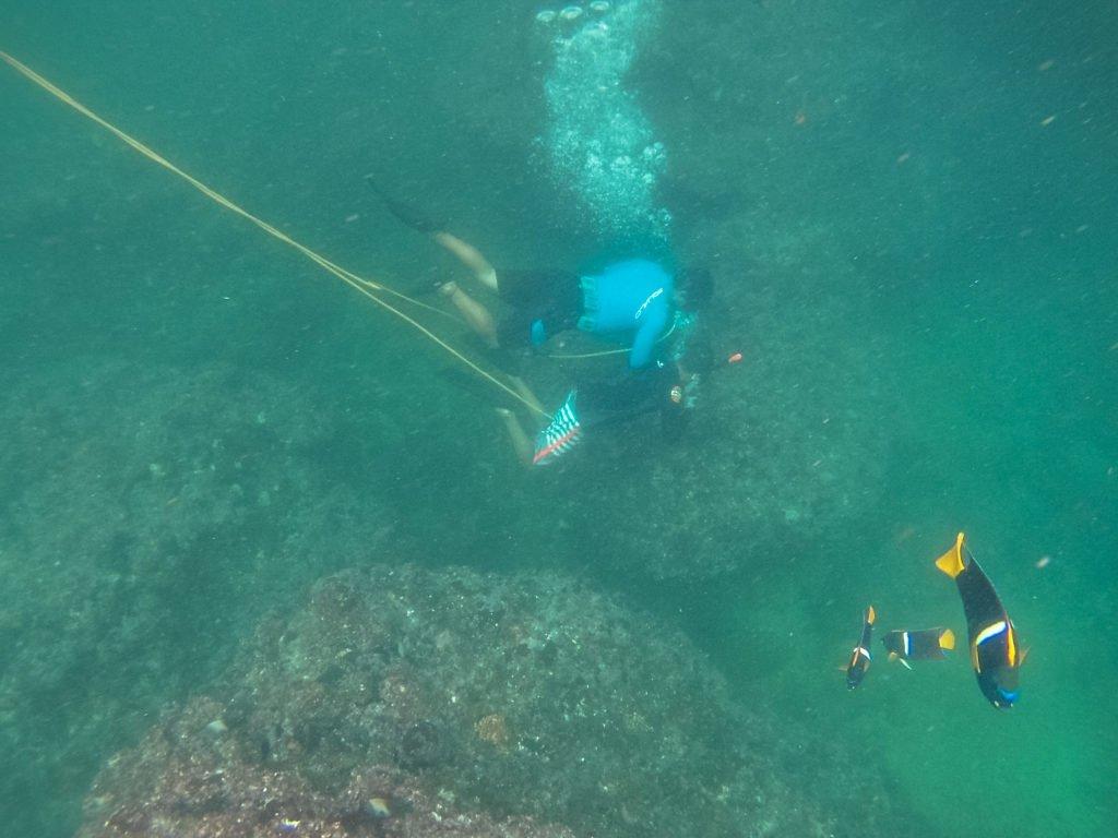 Sightseeing & Snorkeling Tour 2