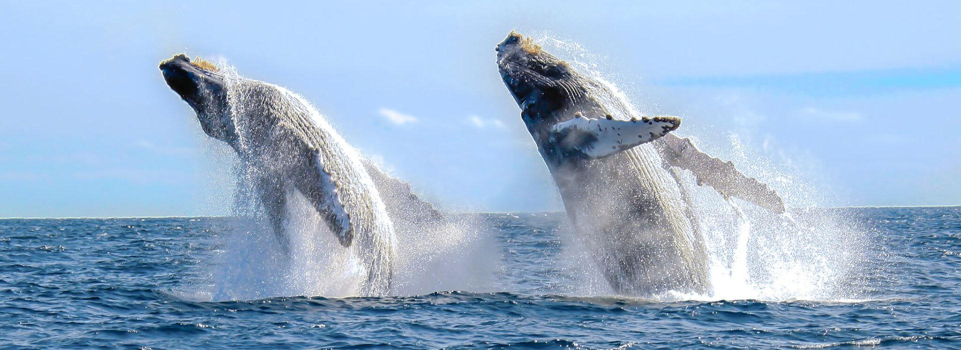 whalewatching 1