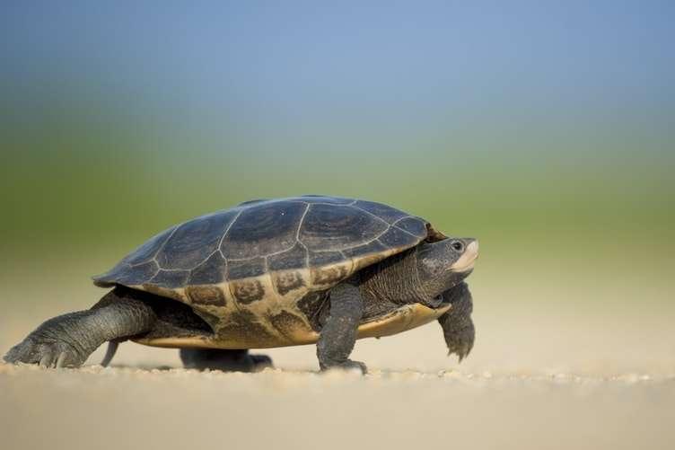 turtle release Puerto Vallarta