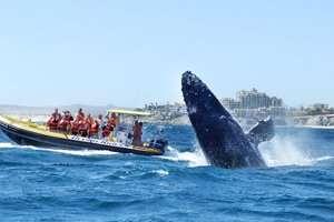 whale-watching-puerto-vallarta2